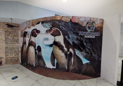 dónde ver pingüinos